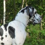 doggi222