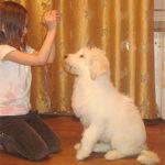 ujnor_pup_girl300112