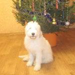 ujnor_pup_girl300112b